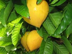 egg fruit edible fruits